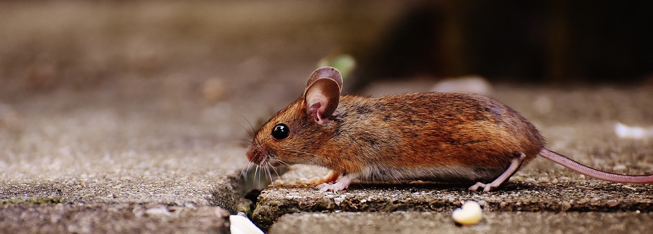mouse-1708192_1280