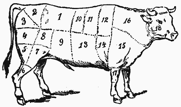Diagram of different cuts of meat in a cow