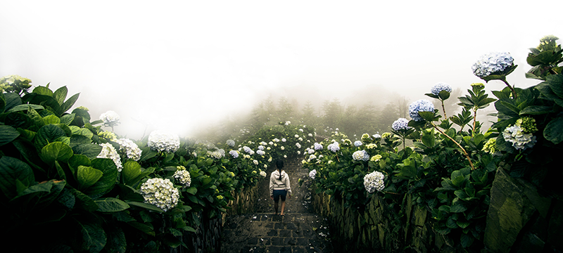 Person walking down a path in a misty garden