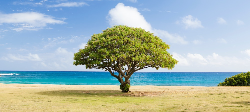 A tree stands by the ocean