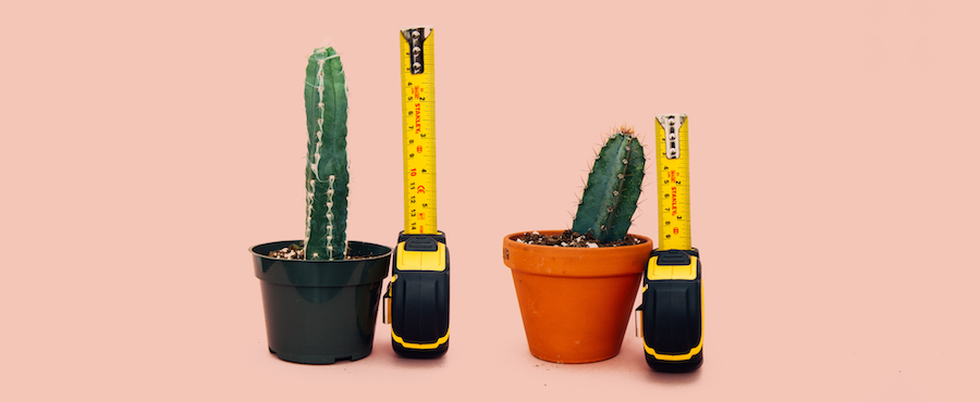 Competitive cactus testing