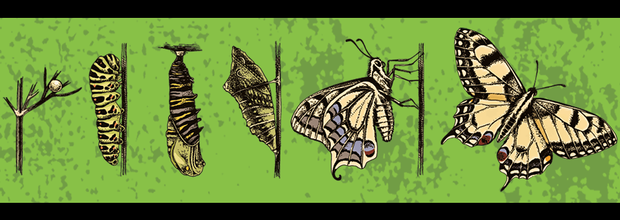 TryMyUI as a butterfly life cycle to demonstrate user testing growth